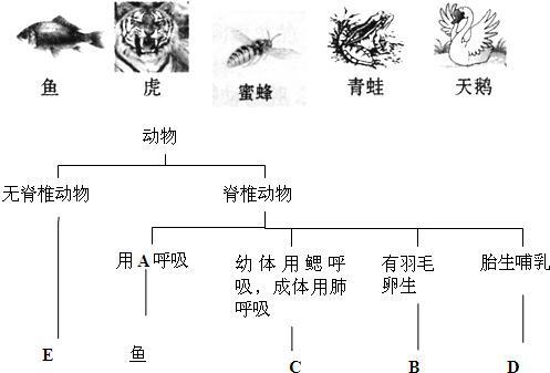 下列为5种动物及它们的部分分类特征,请据如图回答