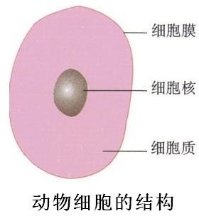 在下面适当的位置按生物绘图的画法要求.画一个结构比较完整的动物细胞结构简图.注明所画图形的名称.并标注图中主要结构. 题目和参考答案 精英家教网