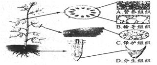 如图为蝗虫的外部形态及内部结构示意图.请回答下列问题. 1 蝗虫跳跃.飞行的动力来自与 胸胸部发达的肌肉 内填图中数码.其后填相应的名称.以下同 2