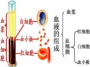 如图为血液的组成图.请据图回答:(1)甲试管出现