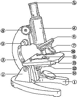 观察如图的显微镜结构图,并回答问题.(在[]内填标号,在横线上填名称)