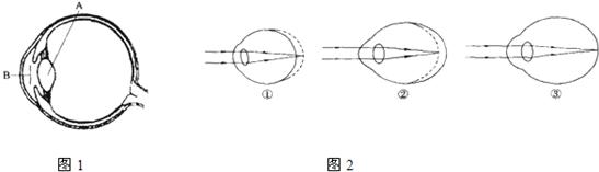 初中生物眼睛结构图
