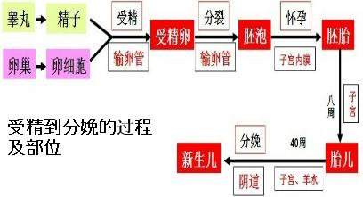 人体女性生殖系统的结构和功能 专题: 解答:解:(1)(1)图中①是卵巢;②