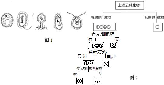 ②细菌,③噬菌体(细菌性病毒无细胞结构),④草履虫,⑤衣藻 (2)分类