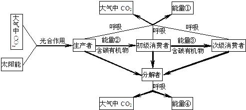 乙烯生物合成关键步骤