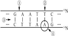 关于蓝藻与黑藻共性的叙述.正确的是 A.均有双层膜包被的细胞核B.均以DNA为主要的遗传物质C.在线粒体内膜上都发生电子传递过程D.在生态系统中都属于生产者 题目和参考答案