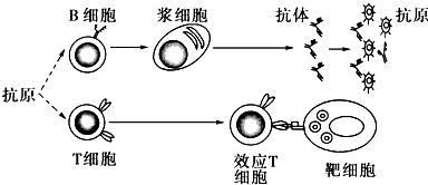 下列不正确的说法是( ) 1)第二章《第4节串联电路和并联电路》课堂同步练习
