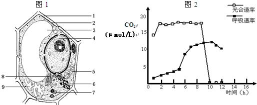 图1是高等植物细胞亚显微结构模式图.据图回答.