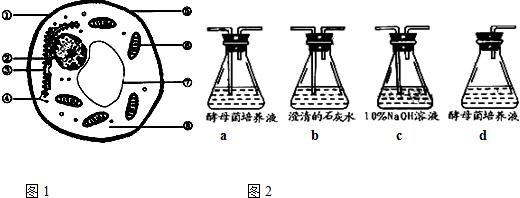 解答: 解:(1)蛋白质和DNA共有的元素是CHON四种元素,e是DNA病毒,f是RNA病毒,构成核苷酸的种类总共是8种,分别是组成DNA的4种:腺嘌呤脱氧核苷酸、鸟嘌呤脱氧核苷酸、胞嘧啶脱氧核苷酸、胸腺嘧啶脱氧核苷酸;组成RNA的4种:腺嘌呤核糖核苷酸、鸟嘌呤核糖核苷酸、胞嘧啶核糖核苷酸、尿嘧啶核糖核苷酸;碱基总共有5种,A、T、G、C、U. (2)蛋白质是基因的指导下完成表达的;一般来讲,DNA指导下合成RNA叫转录,场所为细胞核,由RNA指导合成蛋白质叫翻译,场所为核糖体. (3)赫尔希和蔡斯用的实