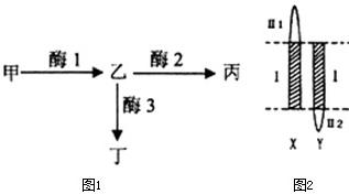 交叉反应的原理_新型冠状病毒218 假阳性反应,免疫检测原理,交叉反应,抗体血清