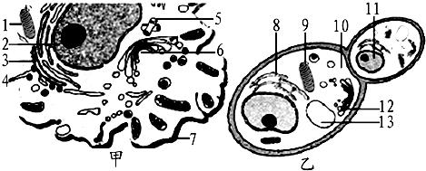 瑞典研究人员最新发现一种促使脂肪细胞生成的蛋白质 抗酒石酸酸性磷酸酶.这一发现有望为治疗肥胖症开辟新途径.相关叙述不正确的是 A.TRAP与脂肪酶共有的元素有