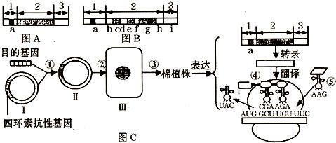 所示三图分别表示基因的结构示意图和利用基因工程培育抗虫棉过程示意