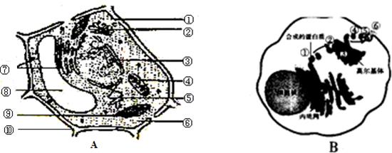 如图a,b分别是两类高等生物细胞的亚显微结构模式图,请据图回答