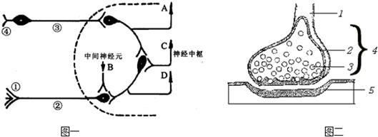 如图一是反射弧的组成示意图(虚线内为神经中枢),图二是突触结构图,请