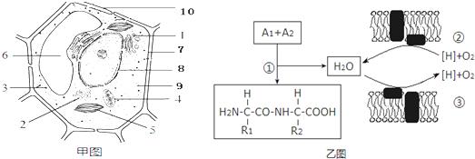 (4)比较甲图中结构4内膜,外膜的蛋白质含量,发现内膜的蛋白质的含量