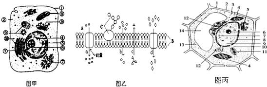 如图为高等动物细胞及细胞膜的亚显微结构模式图(局部),据图回答