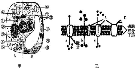 如图为动,植物细胞亚显微结构及细胞部分结构示意图,据图回答下列问题