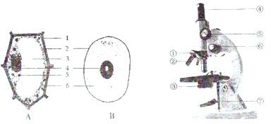 如图分别为结构初中和显微镜结构示意图,请据图回答安阳分布图学校高新区细胞图片