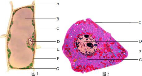 (3)动物,植物细胞都具有的结构是  ,  ,  .