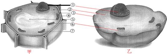 如图是动物细胞和植物细胞结构模式图,据图回答