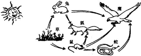 下列是草原生态系统的食物网示意图,请据图回答