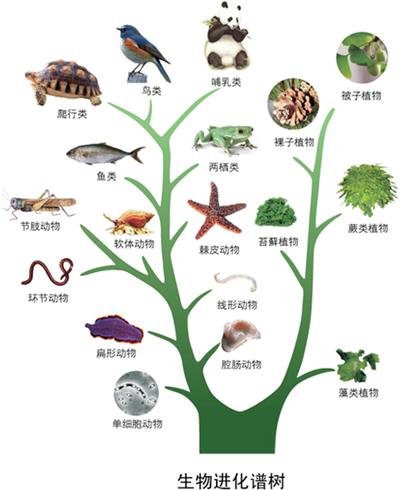 动物之间如何交流信息呢?