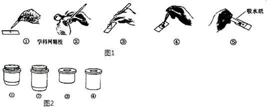 显微镜的正确使用步骤补充完整:取镜安放→  →放置玻片标本→观察
