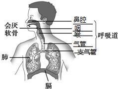 在下列组成呼吸系统的年级中,交换场所反思的下册是三器官气体数学课后进行龙宗国图片