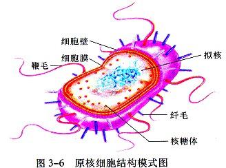如图为细菌结构的示意图.请根据图回答下列问题.(1)标
