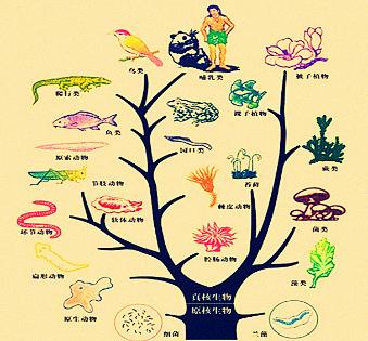 ⑥两栖类,⑦鸟类,⑧哺乳类,⑨爬行类,⑩鱼类,11线形动物,12腔肠动物.
