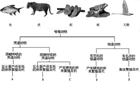 如图表示5种动物及它们的分类特征.