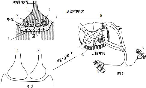 下图是动物细胞示意图.请据图回答 1 图中结构8是 . 2 若甲图是昆虫的飞行肌细胞.则该细胞中的细胞器 较多. 3 高等植物细胞没有甲图中的 .而甲细胞没有植物细胞一定有的细胞结构是