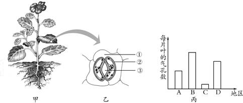 (4)植物根尖分生区细胞的形态结构特点为  .