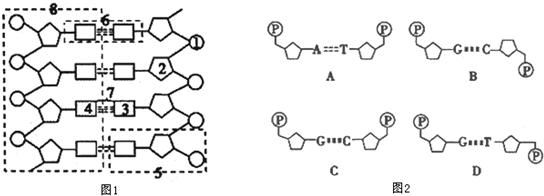如图1是dna分子结构模式图,请据图回答下列问题.
