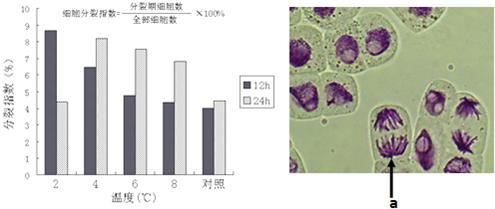 动物细胞培养液  c.生理盐水  d.紫杉醇  e.