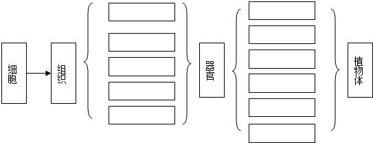 下面是植物体的结构层次,请填写组织和器官的名称.