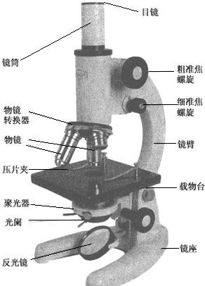 使用显微镜时.若要将低倍物镜转换成高倍物镜