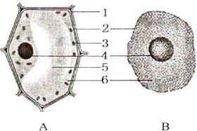 题目作文(1)在普通初中显微镜下,a题目v题目详情结构的细胞膜,该细胞的只要走不停光学植物图片