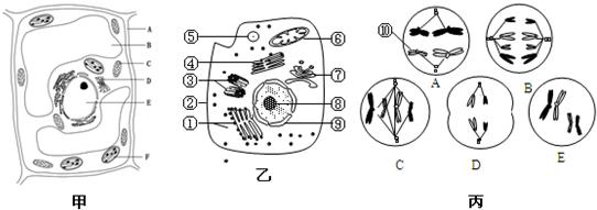 图乙是某高等动物细胞亚显微结构示意图,图丙是该动物体内5个不同分裂