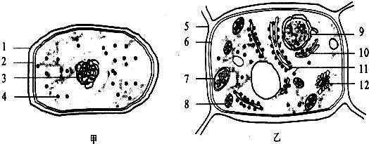 下面是两类细胞的亚显微结构模式图,请据图回答