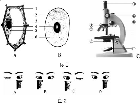 图1分别为细胞结构和显微镜结构示意图,请据图回答