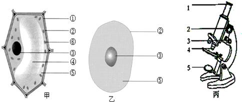 对比甲,乙两图可以看出,植物细胞和动物细胞共有的结构是  (用图中