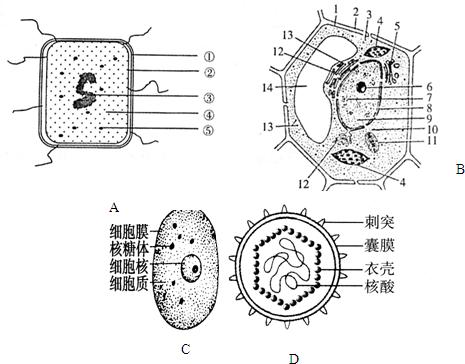 如图是4种生物的基本结构示意图,图a是细菌模式图,请根据图回答下面的