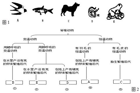 科学家对动物进行分类时往往要根据它们的形态,结构和生理特征,让我们