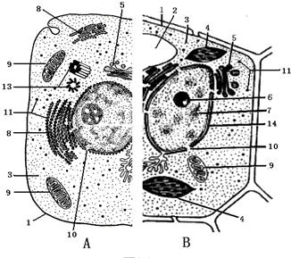 如图表示动物,植物细胞二合一亚显微结构模式图.请据图回答有关问题.