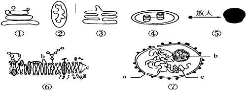 在动物细胞中.具有双层膜结构的是( ) a.线粒体和体b.