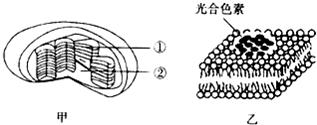 给下列多��ke_下列关于细胞中化合物的叙述中,不正确的是( )