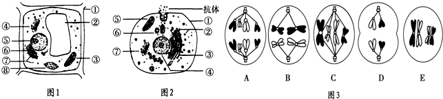 如图1,2分别为植物和动物细胞的亚显微结构模式图,图3为某生物体内