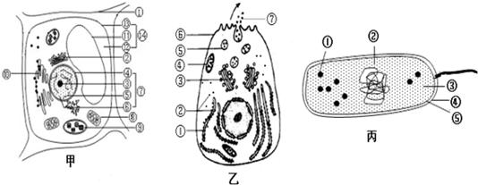 如图表示免疫球蛋白igg的结构示意图,其中-s-s-表示连接两条相邻肽链