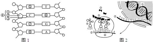 [  ]  和[  ]  交替连接,构成了dna分子的基本骨架;⑥的名称是  ;图中图片